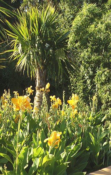 Cote d 39 azur hyeres for Jardin olbius riquier