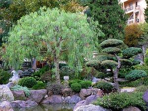 Japanische Bäume Garten Hylenmaddawardscom